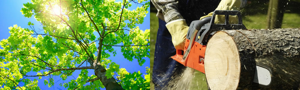 Tree Services Haverhill